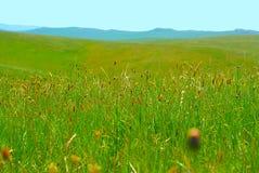 zielona łąka Obraz Stock