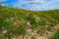 zielona łąka Zdjęcie Stock