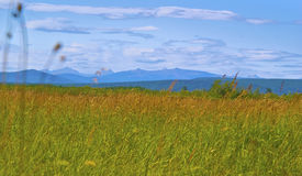 zielona łąka Obraz Royalty Free