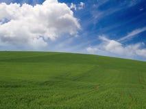 zielona łąka Fotografia Stock