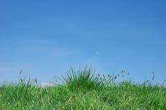 zielona łąka Obrazy Royalty Free