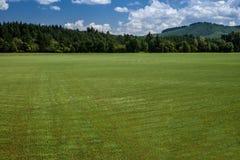 zielona łąka Zdjęcie Royalty Free