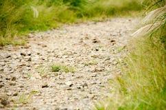 zielona łąka Zdjęcia Stock