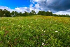 Zielona łąka, drzewa, krajobrazowy rosjanin Fotografia Royalty Free