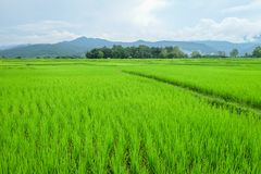 Zielona łąka i błękitna góra obrazy royalty free