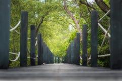 Zielona łąka i drewno sposobów pole kształtujemy teren naturę Zdjęcie Stock