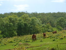 Zielona łąka II fotografia stock