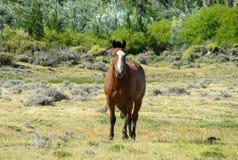 zielona łąka końska Zdjęcia Stock