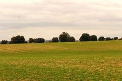 zielona łąka krajobrazowa obraz royalty free