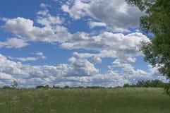 zielona łąka krajobrazowa Obrazy Stock