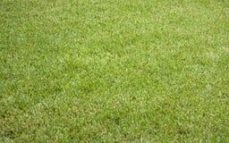 Zielona łąka lub gazon fotografia royalty free