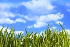 Zielona łąka na nieba tle Fotografia Royalty Free