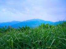 Zielona łąka pod niebieskim niebem Zdjęcie Royalty Free