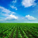 Zielona łąka pod niebieskim niebem Fotografia Stock
