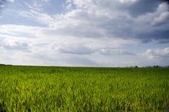 Zielona łąka pod niebieskim niebem z chmurami Fotografia Stock