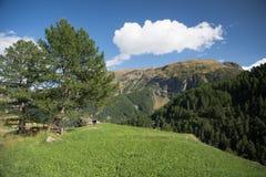 Zielona łąka w Alps Fotografia Royalty Free
