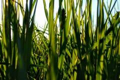 Zielona łąka w lecie Zdjęcie Stock