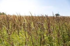 Zielona łąka w lecie Zdjęcie Royalty Free