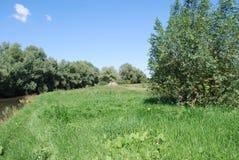 Zielona łąka w swój uroku Obrazy Stock