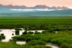 Zielona łąka z bydłem i górą zdjęcia royalty free