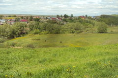Zielona łąka z delikatnie pasać krowy Fotografia Royalty Free