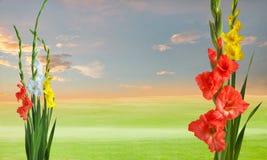 Zielona łąka z gladiola kwiatami Zdjęcia Stock