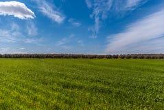 Zielona łąka z niebieskim niebem przy Fuente De Piedra, Malaga obrazy royalty free