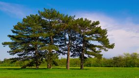 Zielona łąka z Sześć sosnami