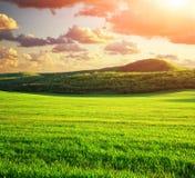 zielona łąkowa góra Zdjęcie Stock