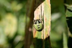 zielona ładna dżdżownica Obraz Stock