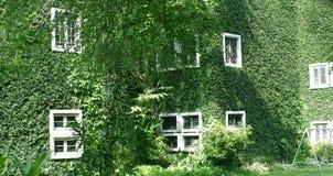 Zielona ściana na budynku zdjęcie stock