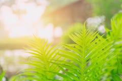 Zielona świeża natury ekologia paproć Obrazy Royalty Free