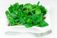 Zielona Świeża sałatka na talerzu Obraz Royalty Free