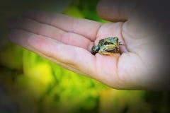 Zielona żaba na palmie twój ręka zdjęcia stock