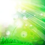 Zielona abstrakcjonistyczna natura Fotografia Royalty Free
