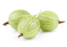 Zielona agrestowa owoc Zdjęcie Royalty Free