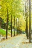 Zielona aleja z drzewami w parku Fotografia Stock