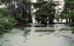 zielona bagno sceneria w jeziornej oknówce Louisiana obraz royalty free
