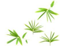 bambusów liście Obrazy Royalty Free