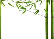 Zielona bambusowa roślina na białym tle Obraz Stock