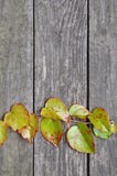 Zielona bluszcz gałązka na drewnianych deskach Zdjęcia Royalty Free