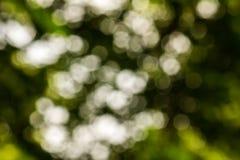 Zielona bokeh i plamy zielona trawa Zdjęcie Stock