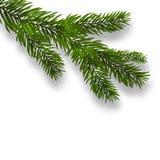 Zielona bujny gałąź świerczyna i realistyczni cienie Odosobniony biały tło ilustracja Zdjęcia Royalty Free