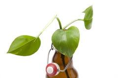 zielona butelki roślina Zdjęcie Stock