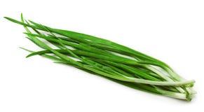 Zielona cebula Zdjęcia Stock