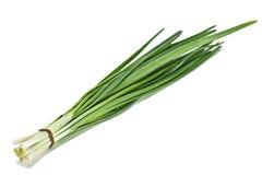 zielona cebula obraz stock