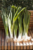 Zielona cebula jest na świetle słonecznym Zdjęcia Stock