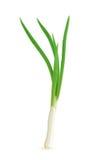 Zielona cebula Fotografia Stock