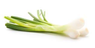 Zielona cebula na bielu Zdjęcie Stock
