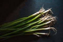 Zielona cebula na zmroku - szarość krytykują Fotografia Stock